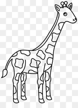 Bebe Girafes La Girafe Reticulee Livre De Coloriage Png Bebe Girafes La Girafe Reticulee Livre De Coloriage Transparentes Png Gratuit